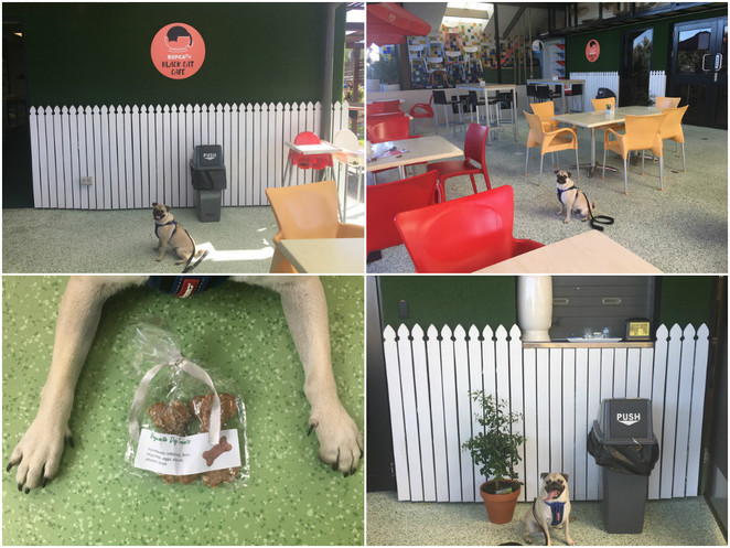 rspca black cat cafe, cafe, dog treats, pet treats, dog friendly, cat cafe, rspca, wacol, western suburbs, southern suburbs, brisbane, charity, animal rescue, animal organisation, animal welfare, animal rights, adopt animal, adoption, rescue, foster