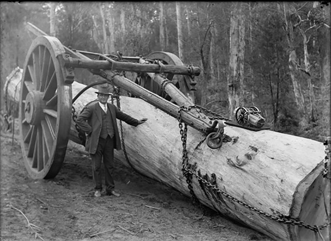 South West Rail and Heritage Centre Present Trees on Trains. A Whim was a large 'carriage' for hauling large logs often pulled by horses or bullocks and later by steam traction engines (Photo courtesy of State Library of Western Australia 022017PD).
