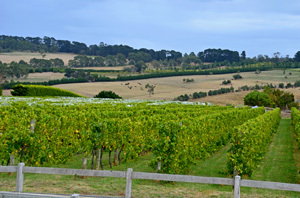 Victoria Mornington Peninsula Red Hill Merricks Wine Wineries Food Family Day Out