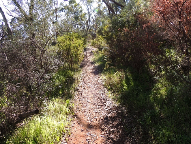 walking, mountain bike, park, quarry, trail, trails, walking trail, randell park, hill