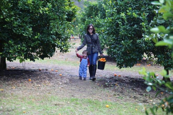 Watkins Family Farm, pick your own, mandarins and mushrooms, Wisemans Ferry, fun for kids, kids in sydney, winter excursions