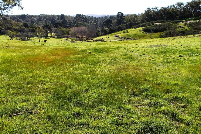 adelaide hills, aldgate, mylor, trail, walking trail, bandicoots, walk, adelaide, dogs, valley