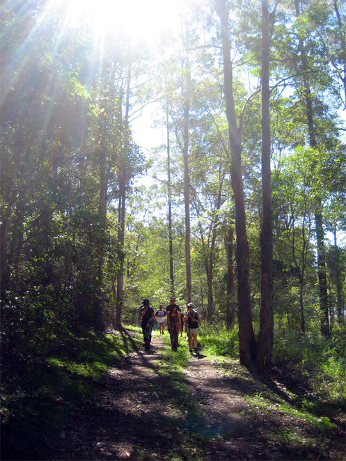 Wide shady trails around Enoggera Reservoir