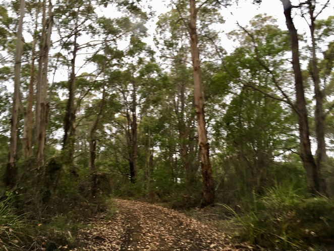 entry, trees, bushland, native, Denmark, Western Australia, great southern