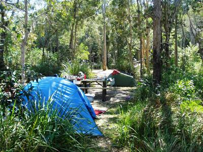 fig tree point, camping