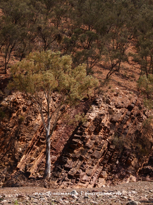 Flinders Ranges geology