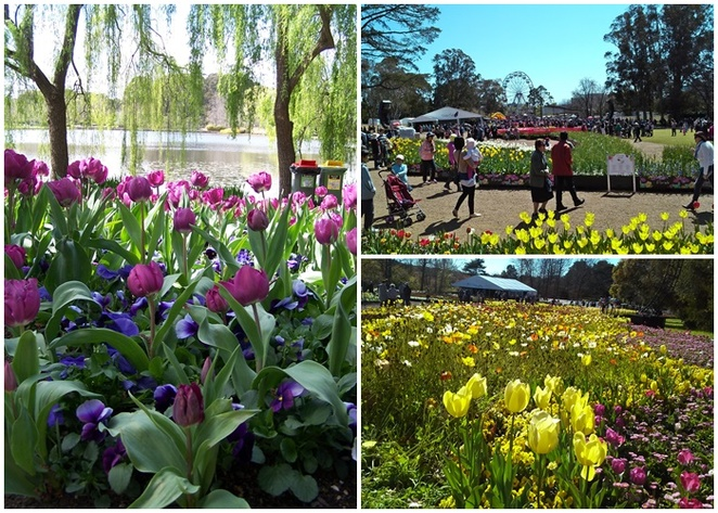 floriade, commonwealth park, parkes, regatta point, flowers, tulips, canberra, australia, flower festival, spring, what to do in canberra, things to do in canberra, parkes,