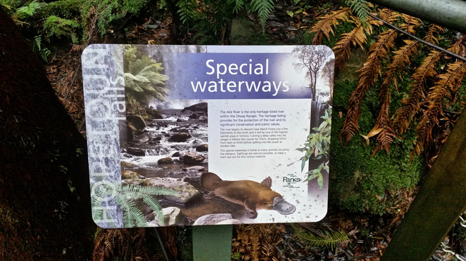 Hopetoun Falls, Otways, Waterfall, Great Otway National Park, Gellibrand, Victoria, Bushwalking, Hiking, Picnic, Picnic Table, Scenic Walk, National Park, Platypus, Interpretive Sign, Information sign, Parks Victoria,