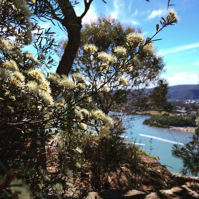 muogamarra, national park, nature reserve, wildflower, nature, walk, deerubbin, lookout, hawkesbury, river
