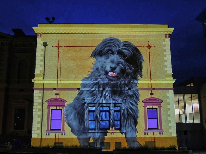 state library sa, story wall, history of south australia, fun for kids, free things to do, in adelaide, illuminart, story wall at the state library, adelaide attractions, bob the railway dog