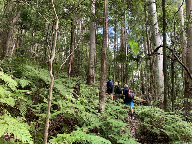 The Cream Track, Serenity Farm, Highland Cattle, Gold Coast Hinterland, Tallebudgera Valley, Springbrook Plateau, Goomoolahra Falls, English Garden Café, Hideaway Café, Hiking South East Qld and More, Hiking trails at Tallebudgera, Scenic Drive,