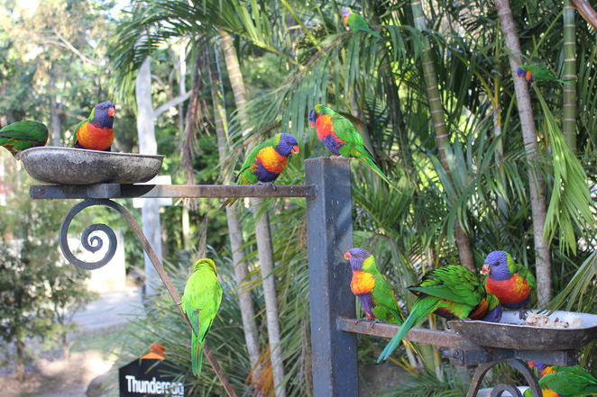 Thunderbird Park, Tamborine Mountain, kids, outdoor activities, laser skirmish, adventure park, horse trail ride.