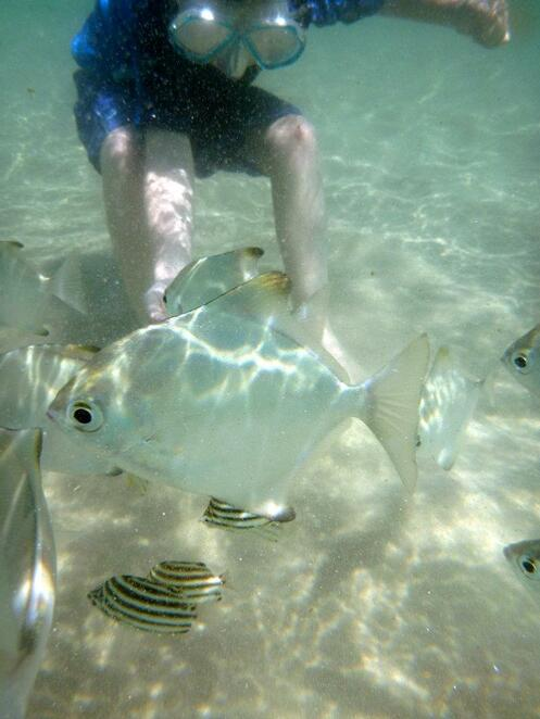 Curious fish delight the kids at Wave Break Island