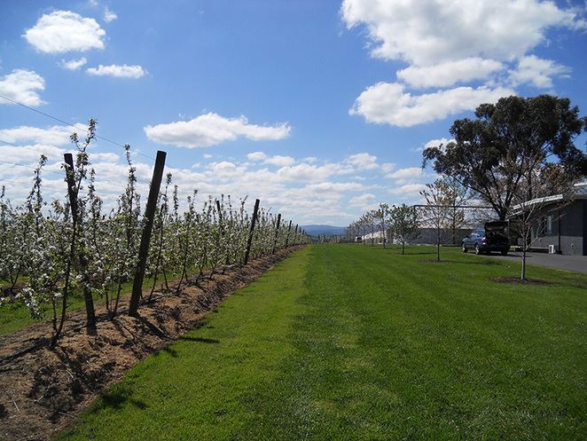 Yarra Valley Food and Wine Tour Epicurean