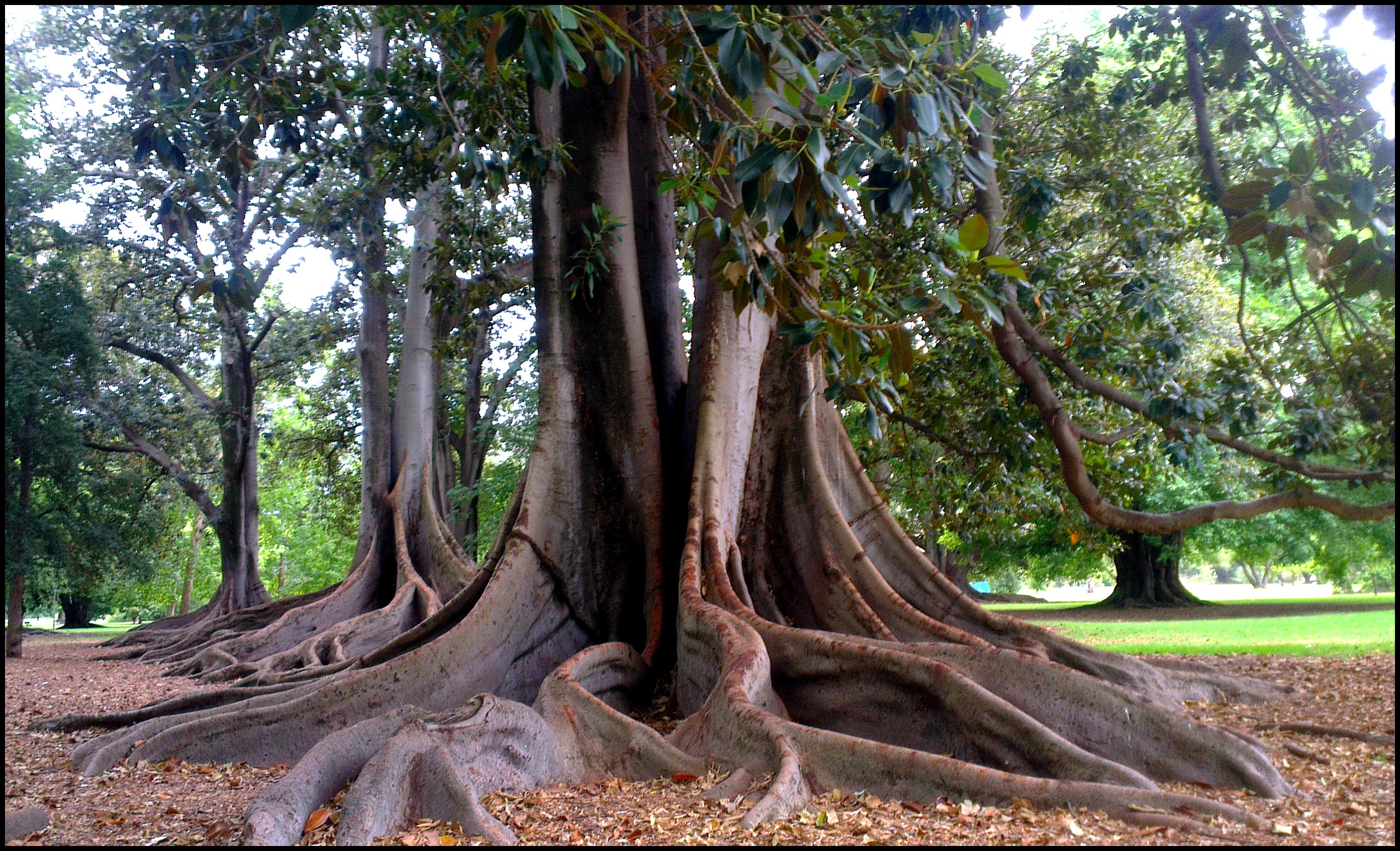 Adelaide 39 s best free school holiday activities adelaide for Garden trees adelaide