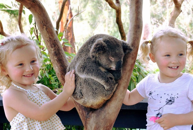 australian reptile zoo, gosford, central coast, zoo, reptiles, tourist attractions, family friendly, family, family attractions, NSW, things to do, road trips from Sydney, day trips from Sydney, weekend trips from sydney