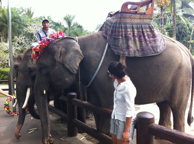 Balis Elephant Sanctuary