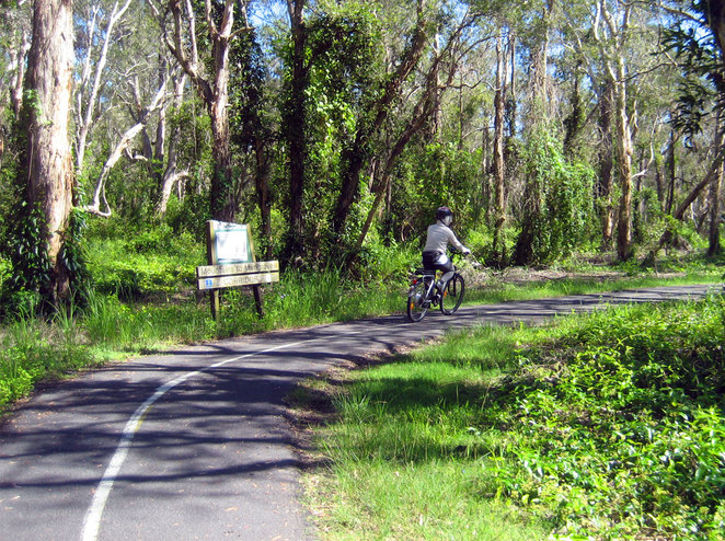 Forest area of the Boondall Wetlands Bikeway