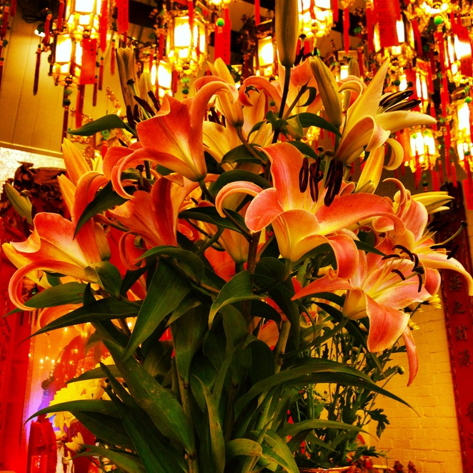 chinese, temple, sze, yup, glebe, sydney, exotic, cultural, spiritual, candle, flowers, fruit, offerings, lanterns, light