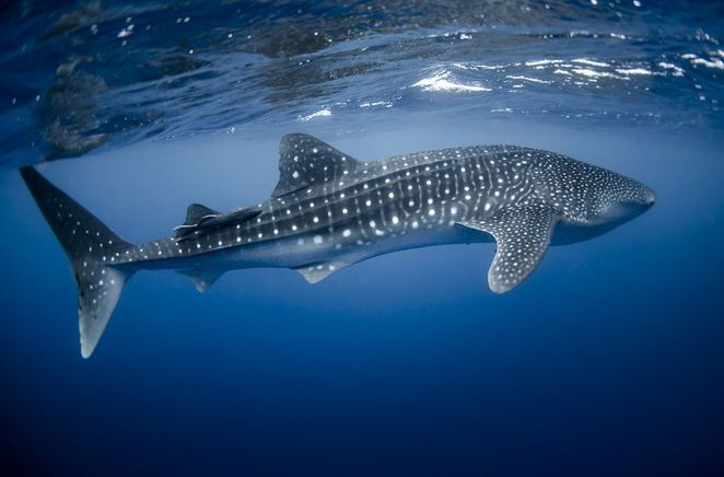 Coral Bay, Exmouth, Coral Coast, Ningaloo Reef, Snorkelling, Whale Sharks, Humpback Whales, Perth Holidays, Escape the City