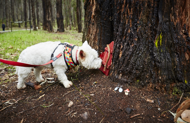 Gourmet PawPrints Picnic Adventures Dog-friendly activities exploring with dogs