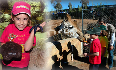 national zoo and aquarium, zoocation, school holiday programs, canberra, ACT, summer holidays 2015,