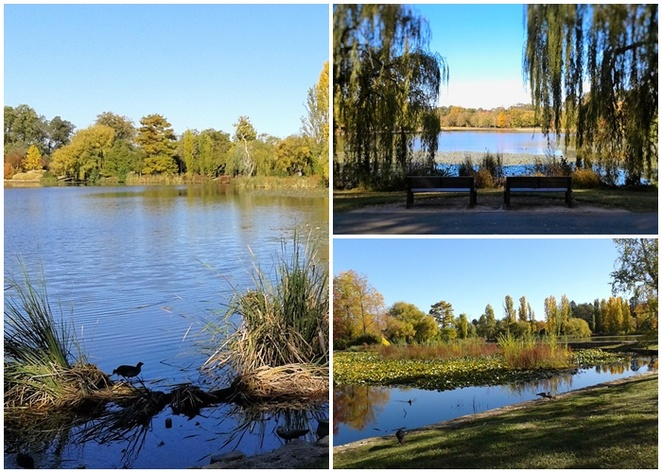 nerang pool, commonwealth park, canberra, ACT, lake burley griffin, picnic spots, lake, commonwealth park, playgrounds, medievil playground,