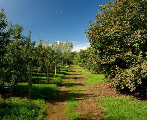 Orchard,walks
