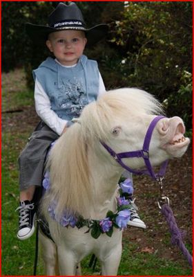 Pony rides in Melbourne