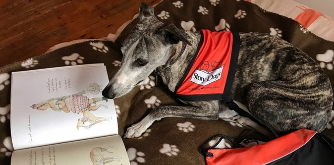 read to dashi the story dog, canberra, ACT libraries, kids, march, 2018,