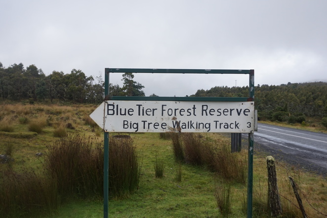 Sign on Tasman Highway to Blue Tier Giant Tree