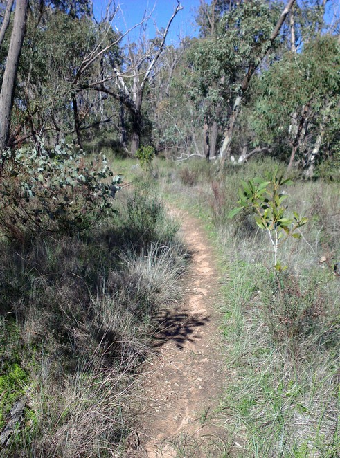 Spring Gully Conservation Park, Cascades Walking Track, Clare Valley Activities