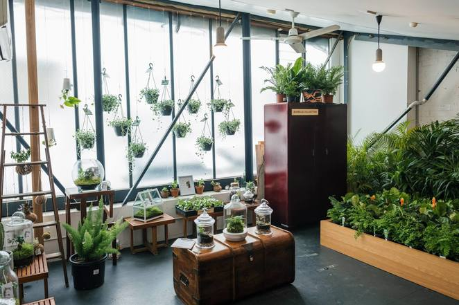 The Jungle Collective indoor plant sale cacti and succulents