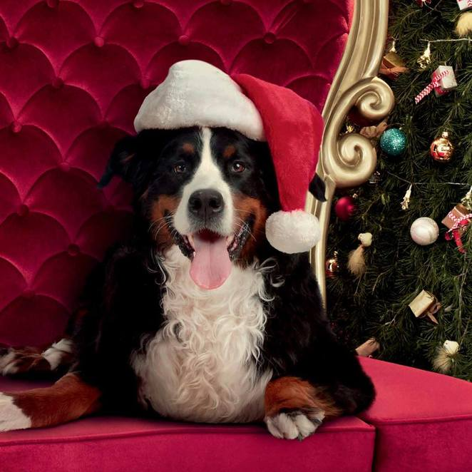 woden westfield shopping centre, canberra, pet photography, santa photos, 2017, pet photography in canberra, dogs, events for dogs,