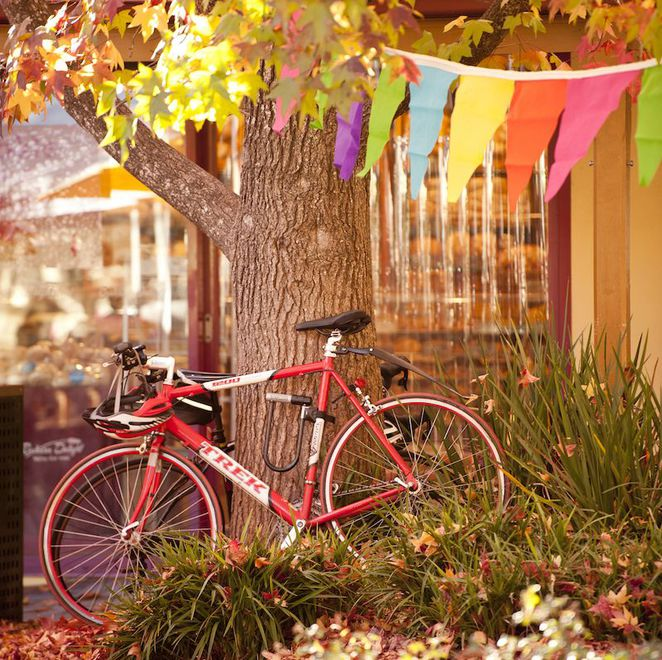 adelaide fringe venues, adelaide fringe festival, fringe festival, adelaide fringe, fringe hubs, live on 5 adelaide oval, royal croquet club, garden of unearthly delights, adelaide oval, on your bike