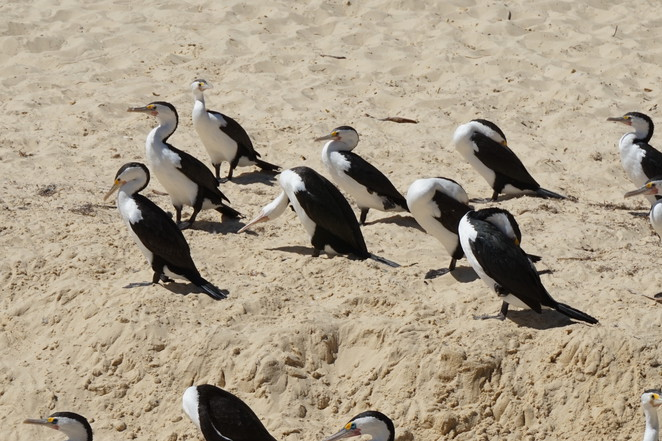 Birds on Moreton Island