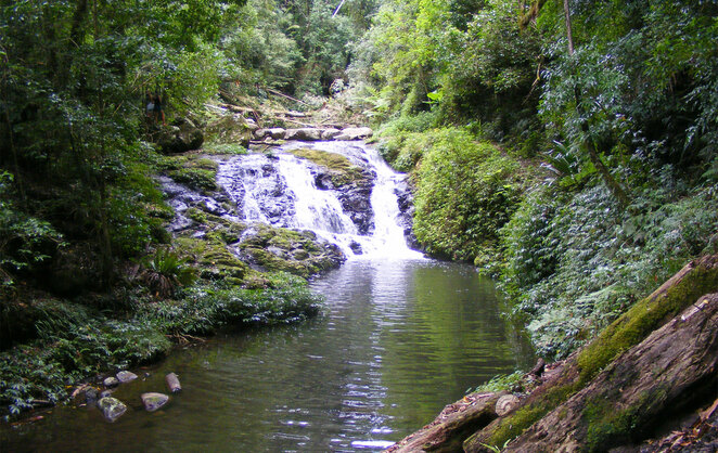 The Cascades on the Box Forest Circuit