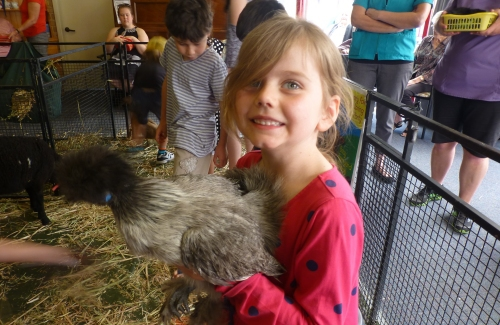 Fluffy chickens loved by young and old