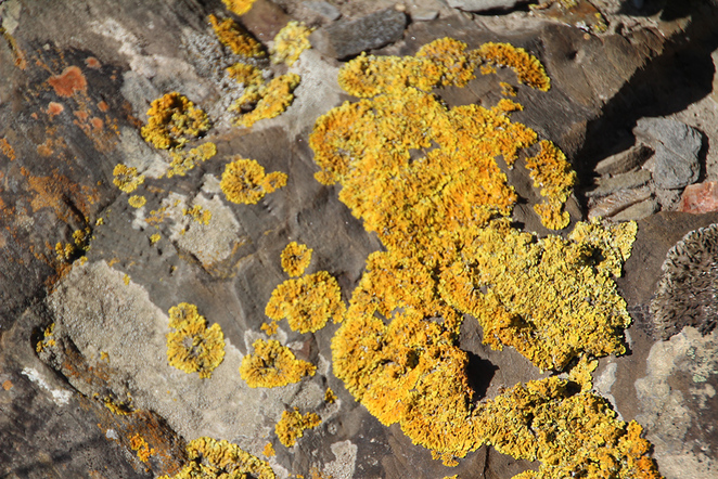 Deep Creek Conservation Park, South Australian tourism, lichen