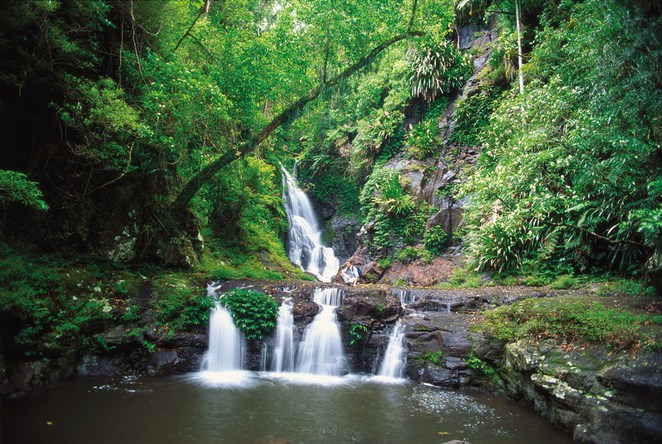 Gondwana Rainforests of Australia, Queensland's World Heritage sites