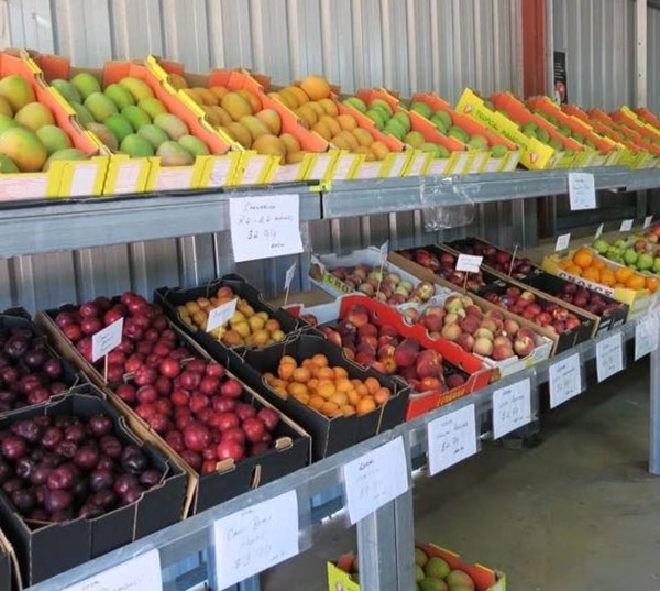 Grower,direct,fruit,and,veggies