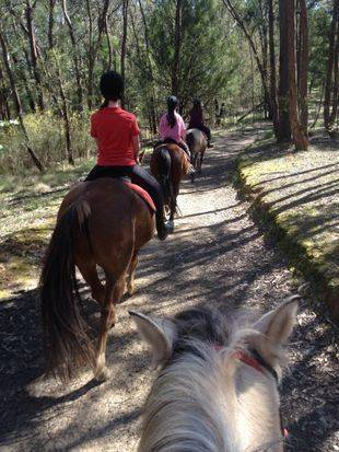 horse riding melbourne tandivale kids lessons