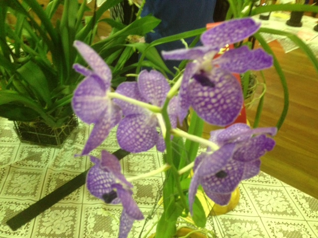 Just one of the orchids on show