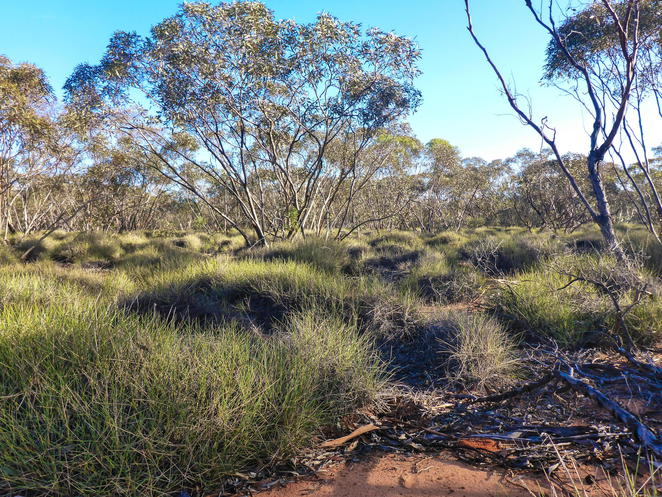 mallee, spinifex, conservation
