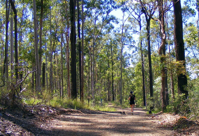 You can do a loop of the park sticking to the wider trails that allow for social distancing
