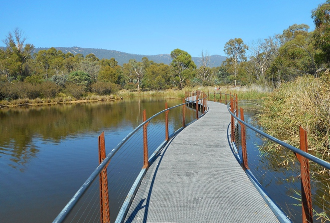 the sanctuary, tidbinbilla nature reserve, australian animals, platypus, wetlands, canberra, ACT