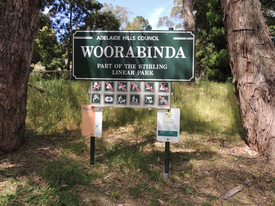 wetlands, ducks, native fauna, wildlife, nature reserve, stirling, woorabinda, woorabinda lake, yacht club, koalas