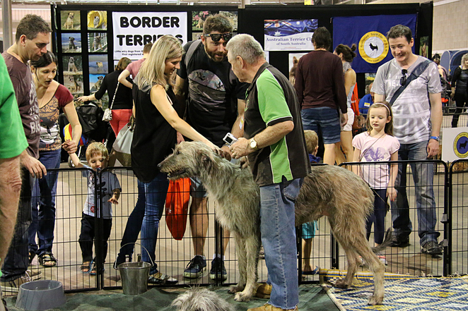 Adelaide, Animal, Expo, 2017, dogs, meet, pat