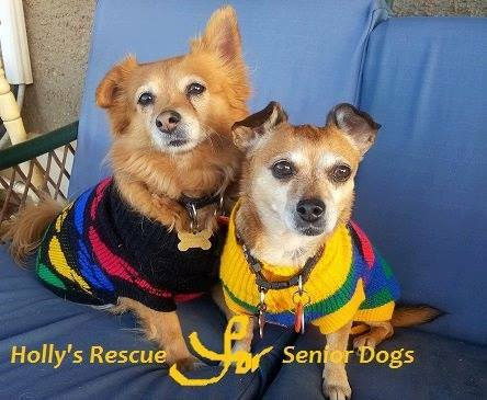 Animal Rescue, animal shelter, pet shelters, animal welfare, rspca, awl, holly's rescue, rachel's rescue