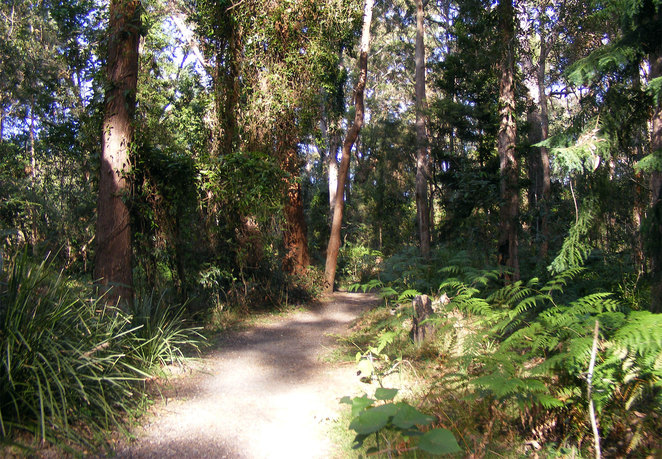 Parts of the Chermside Hill Reserve has a rainforest feel